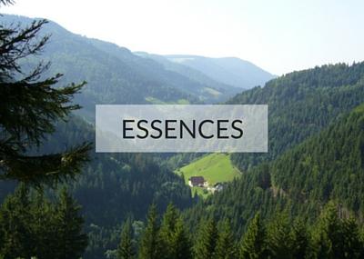 Essences Hiram Forêt et Bois