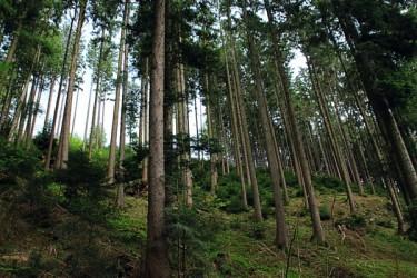 Propriété Forestière - Achat et Vente de forêt