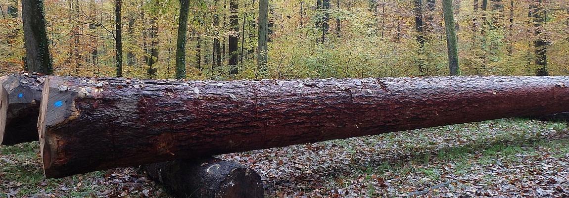Bois d'Oeuvre Mélèze bois rond mélèze