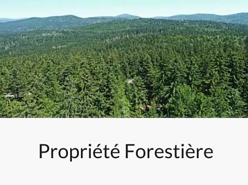 Services Forestière Hiram Forêt et Bois